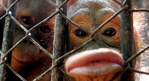 monkey_lips.jpg
